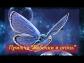 Видео притча.  Притча Бабочки и Огонь